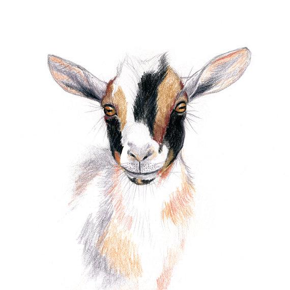 Nigerian Dwarf Goat Wall Art Print Goat Art Goat Drawing.