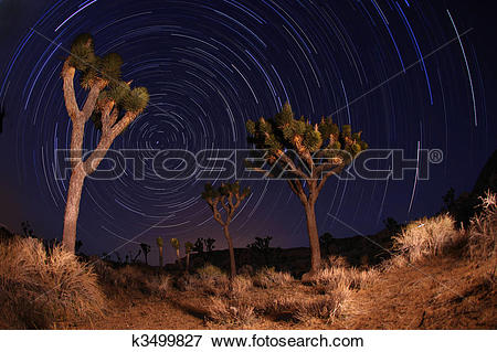 Picture of Night Shot of Star Trails in Joshua Tree National Park.