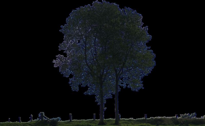 Night tree png 5 » PNG Image.