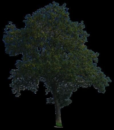 Night tree png 1 » PNG Image.