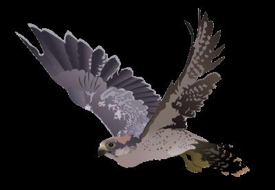 Nighthawk PNG.