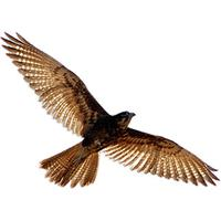 Download Nighthawk Free PNG, icon and clipart.