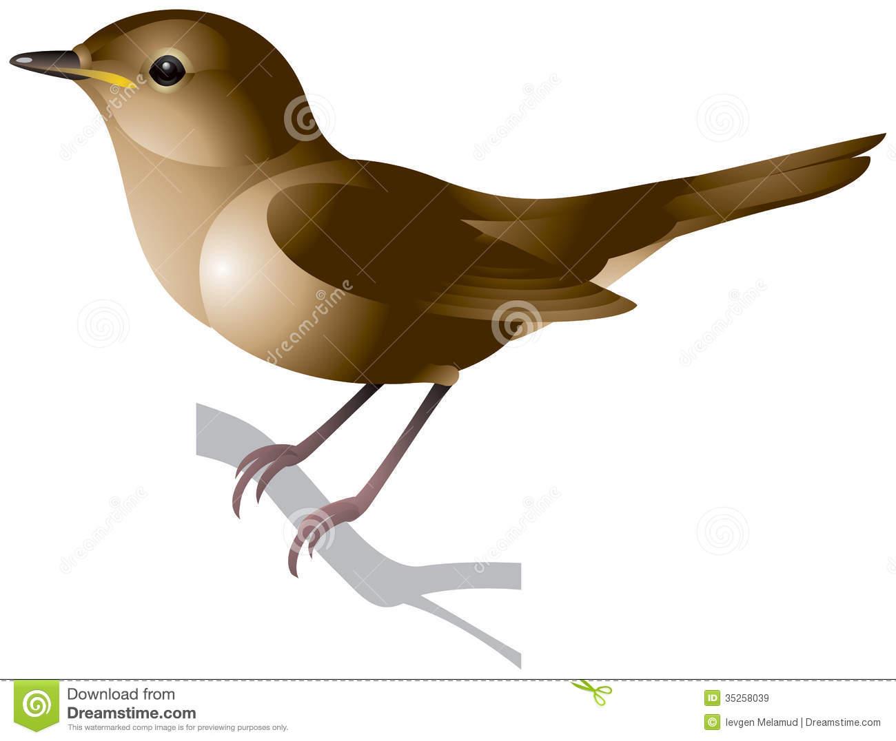 Nightingale Stock Illustrations.