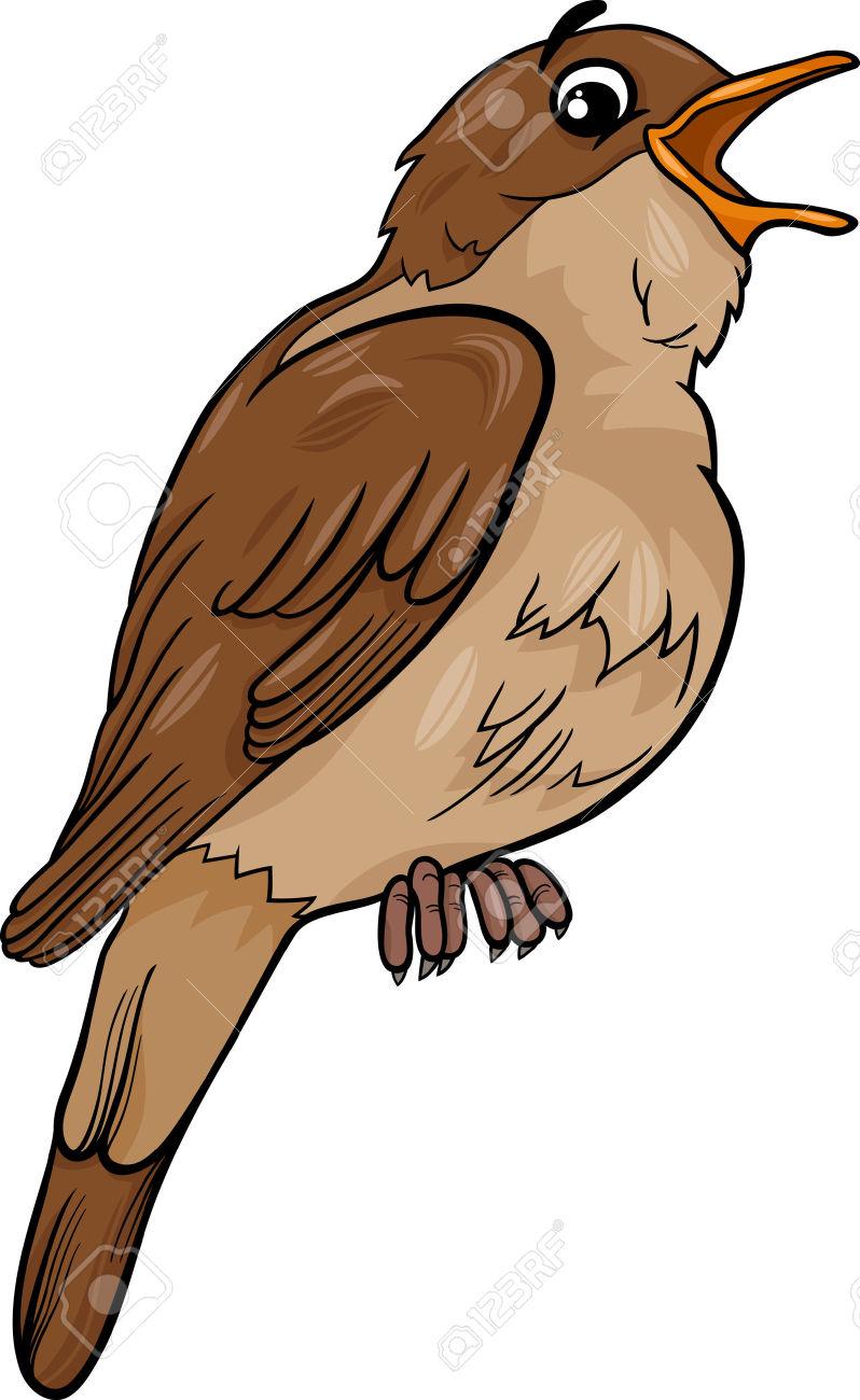 Cartoon Illustration Of Funny Nightingale Bird Animal Royalty Free.