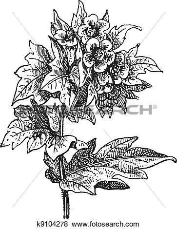 Clip Art of Henbane (Hyoscyamus niger) or stinking nightshade.