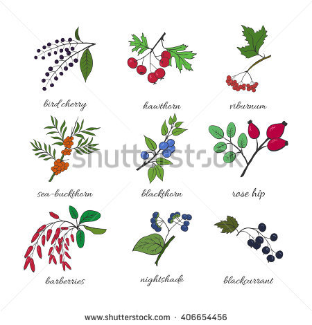 Nightshade Stock Images, Royalty.