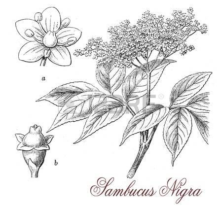 85 Nigra Stock Vector Illustration And Royalty Free Nigra Clipart.