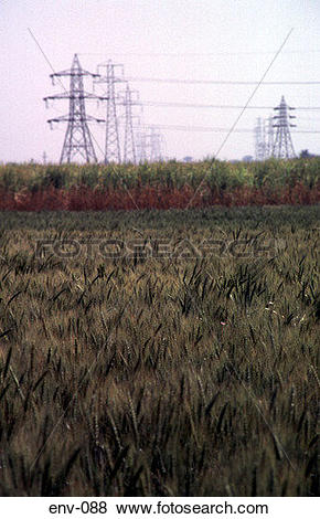 Pictures of Wheat Fields and Distant Pylons Nile Delta Egypt env.