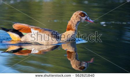 A.von Dueren's Portfolio on Shutterstock.