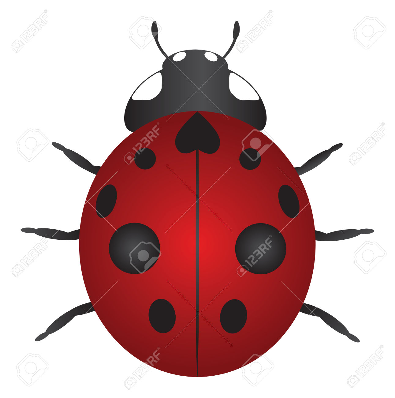 Red Nine Spotted Ladybug Isolated On White Background Color.