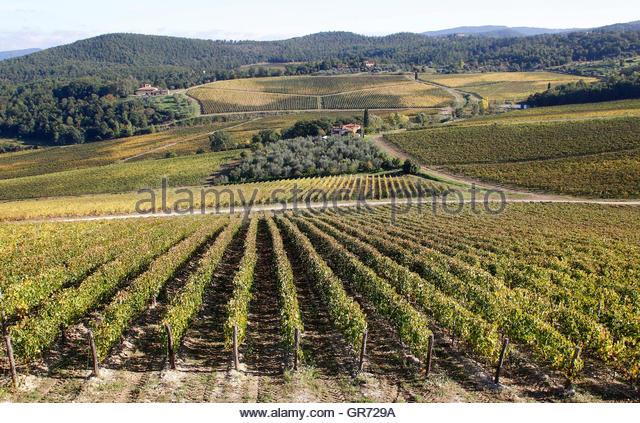 Premium Wines Stock Photos & Premium Wines Stock Images.