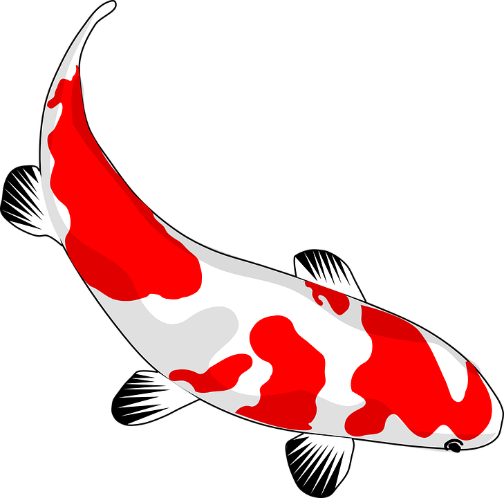 Free vector graphic: Fish, Koi, Red, White, Nishikigoi.