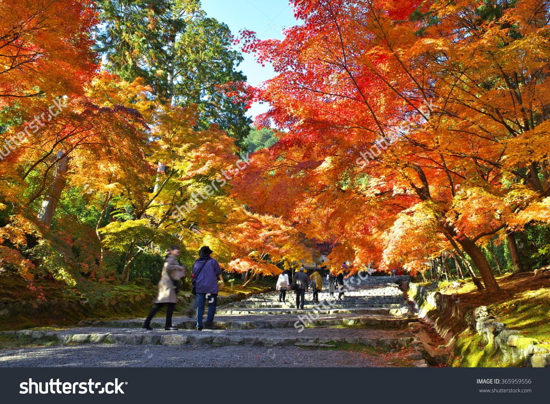 Kyoto Nison.