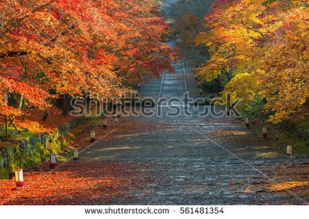 Kyoto Jissoin Temple Autumn Japan Stock Photo 365959550.