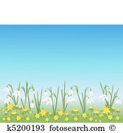 Nivalis Clip Art Illustrations. 12 nivalis clipart EPS vector.