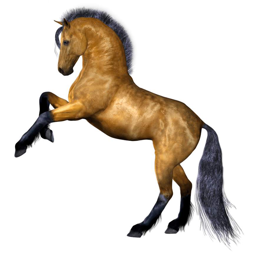 Horse clipart no background.