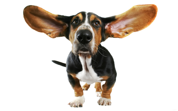 Funny Dog Transparent PNG Clipart.