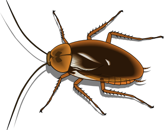 Cockroach Clipart Png.