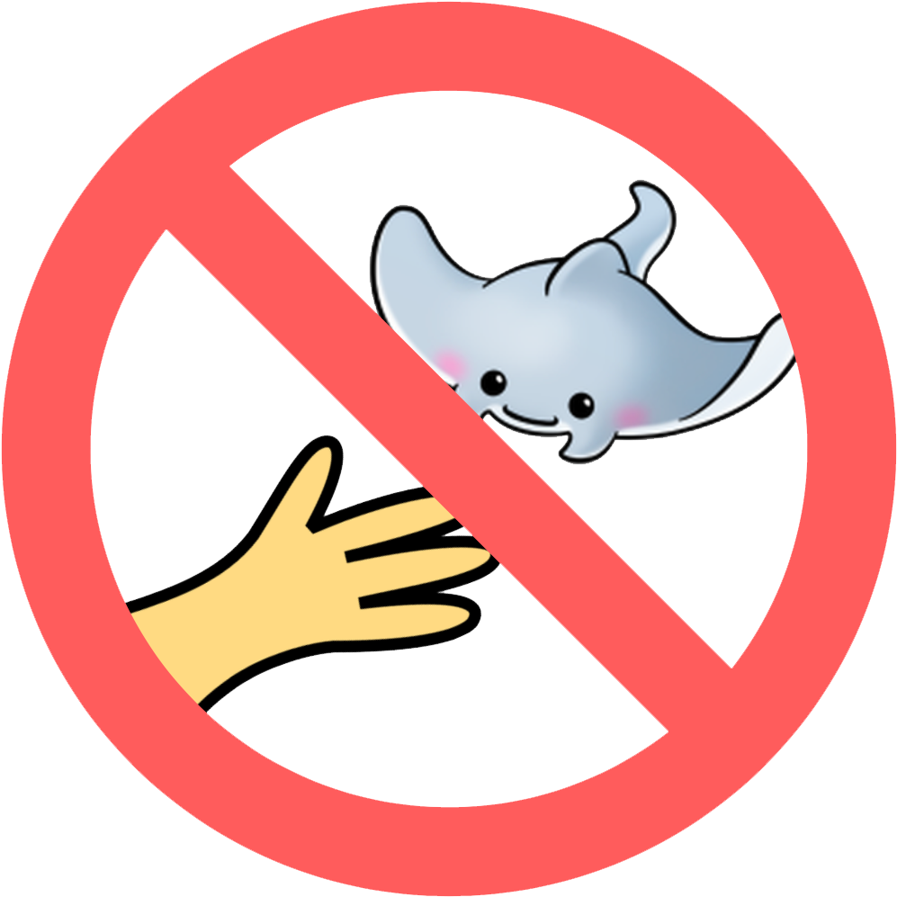 No Touching Or Chasing Marine Life.