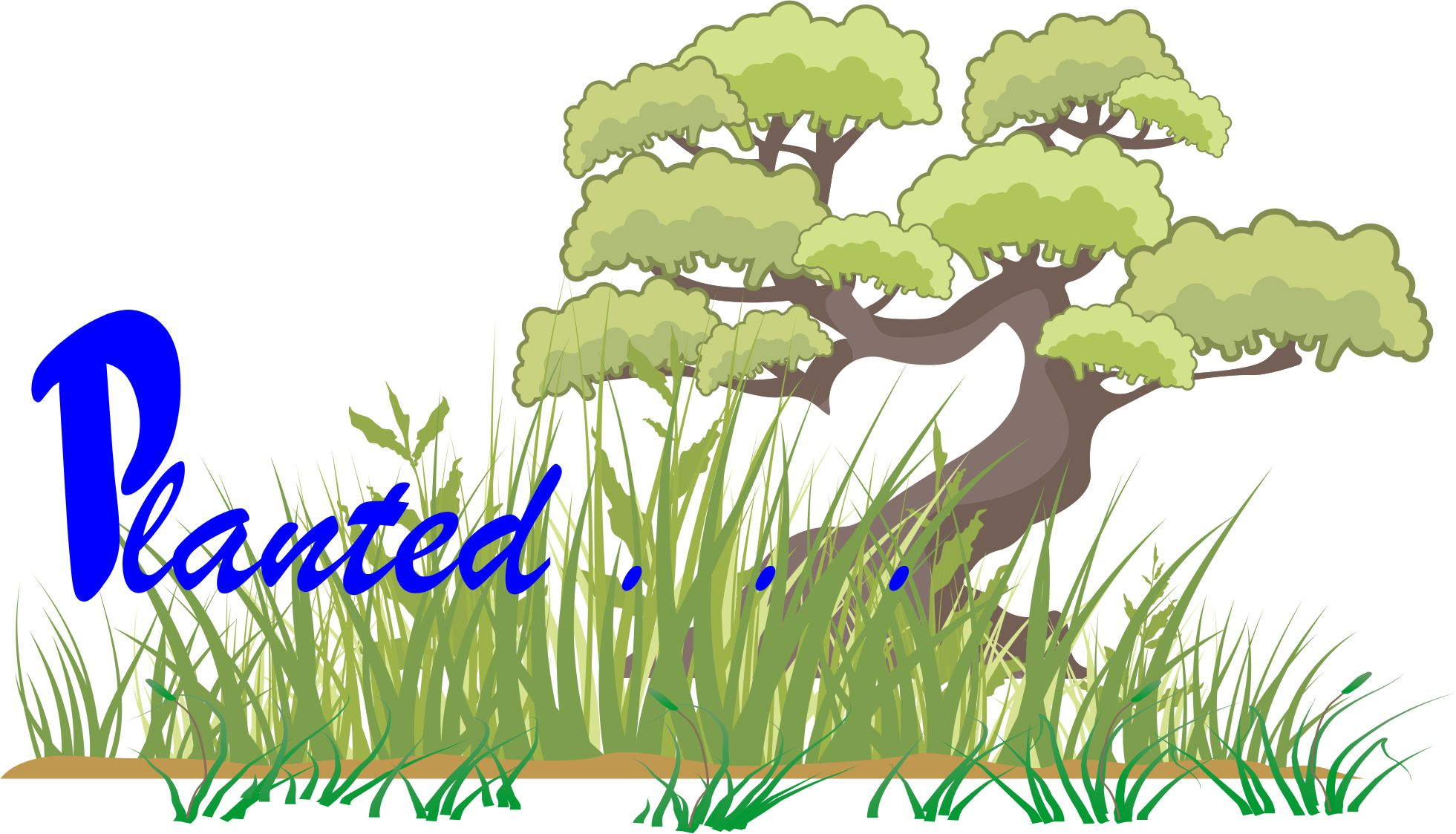 Planted…'….. mentioned in the Holy Bible (KJV).