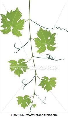 grape, grapes, vine, grapevine, fruit, lineart, illustration.