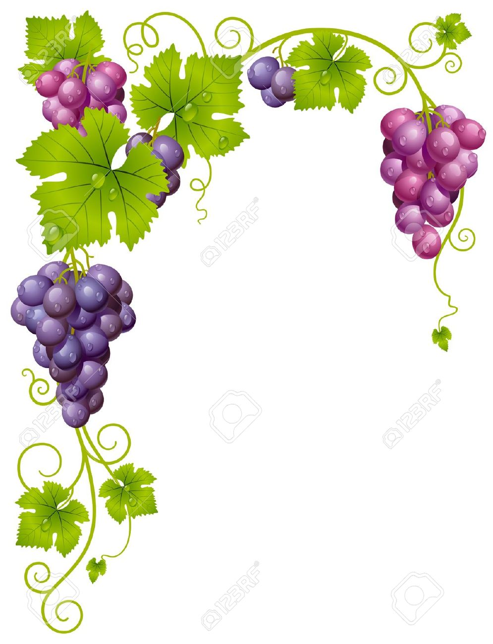 Vector Grape Frame 3 Royalty Free Cliparts, Vectors, And Stock.