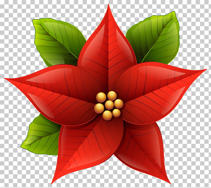 Poinsettia Bowl , Christmas Poinsettia , red poinsettia.