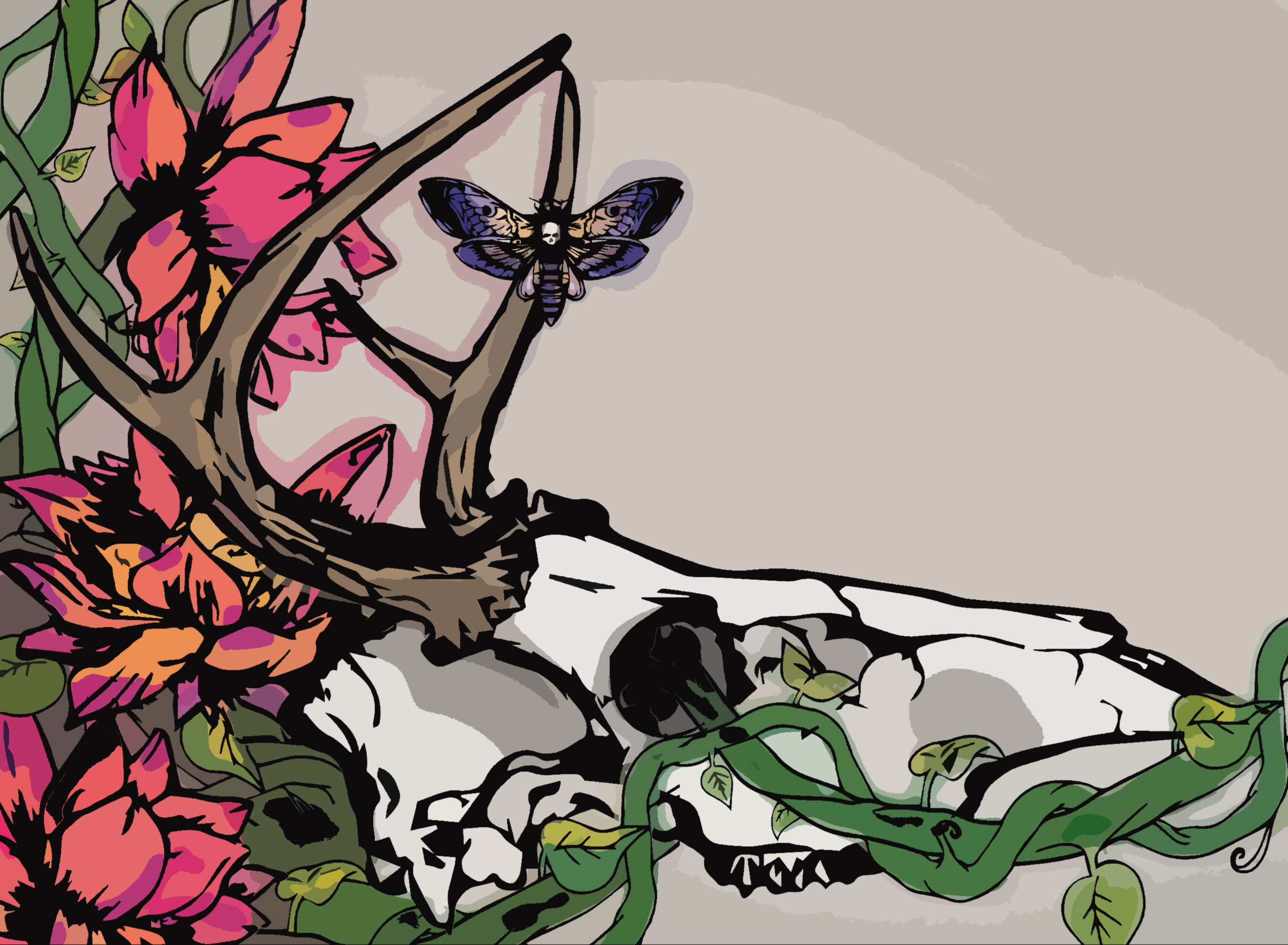 Noctuidae on Behance.