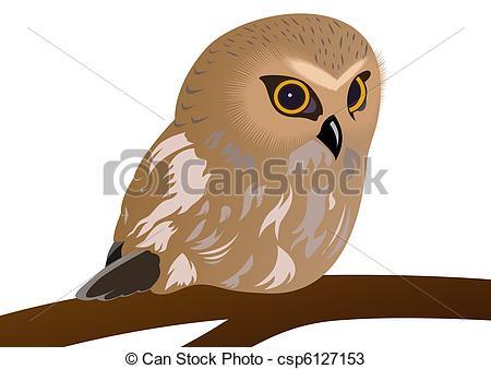 Drawings of Owl.