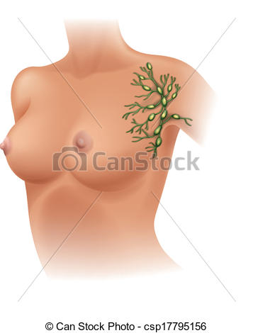 Lymph Illustrations and Clipart. 1,536 Lymph royalty free.