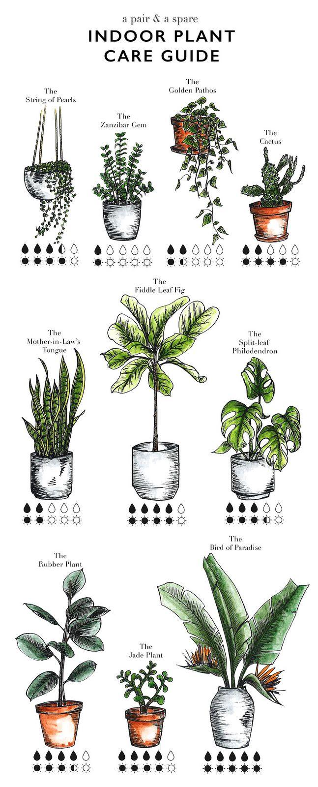 1000+ ideas about Plants Indoor on Pinterest.