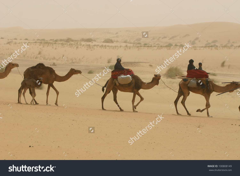 Caravan Berber Nomads Tuareg Tribe Ride Stock Photo 100808149.