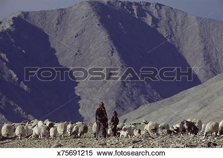 Stock Image of Nomadic tribes people with herd of sheep, Ladakh.