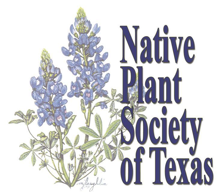 1000+ ideas about Native Plants on Pinterest.