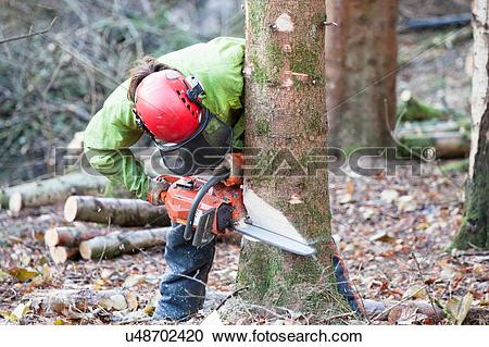 Stock Photography of Conservationist working in a reserve to.