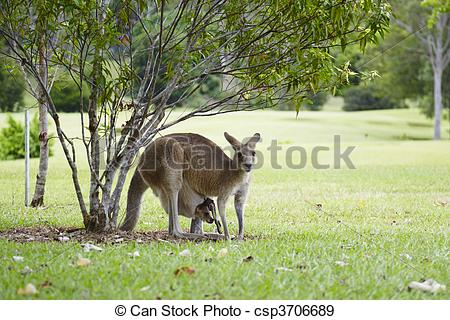 Stock Photographs of Noosa,Noosa Valley Country Club, golf course.