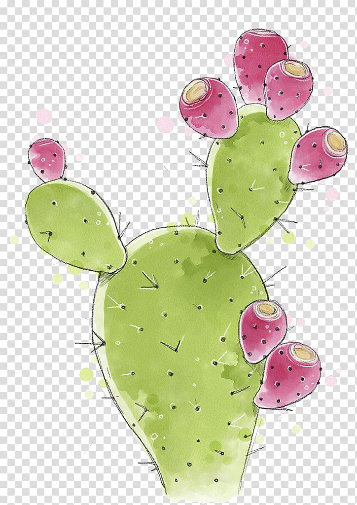 Green and pink cactus illustration, Cactaceae Barbary fig.