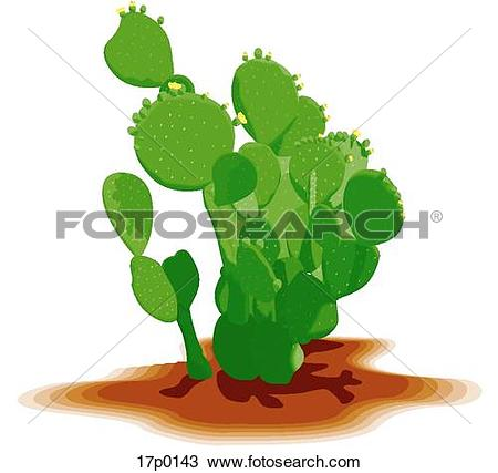 Nopal Stock Photos and Images. 537 nopal pictures and royalty free.