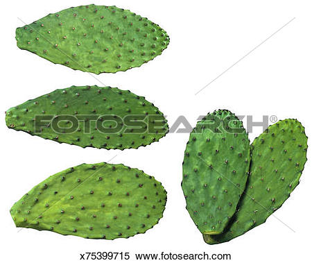 Stock Image of Nopales x75399715.