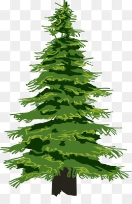 Norfolk Island Pine PNG and Norfolk Island Pine Transparent.