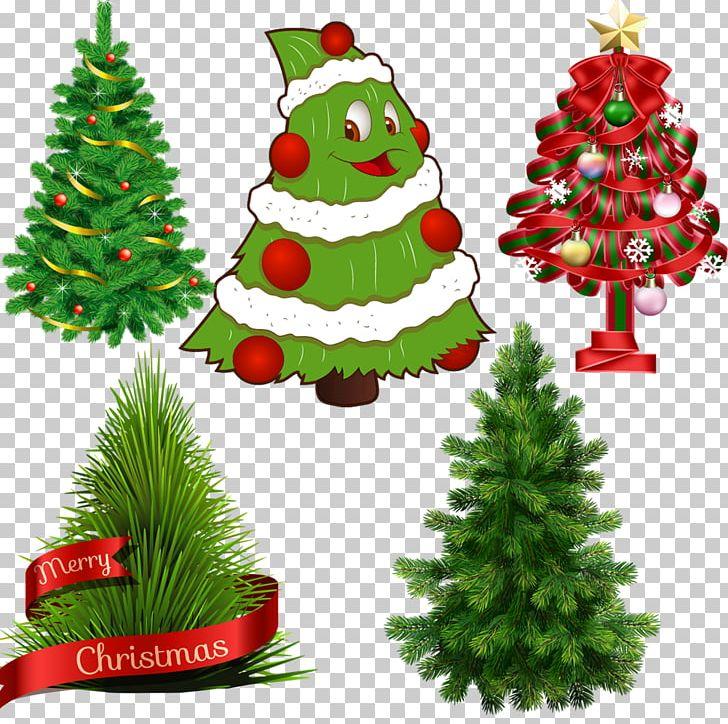 Scots Pine Tree Fir Norfolk Island Pine PNG, Clipart.