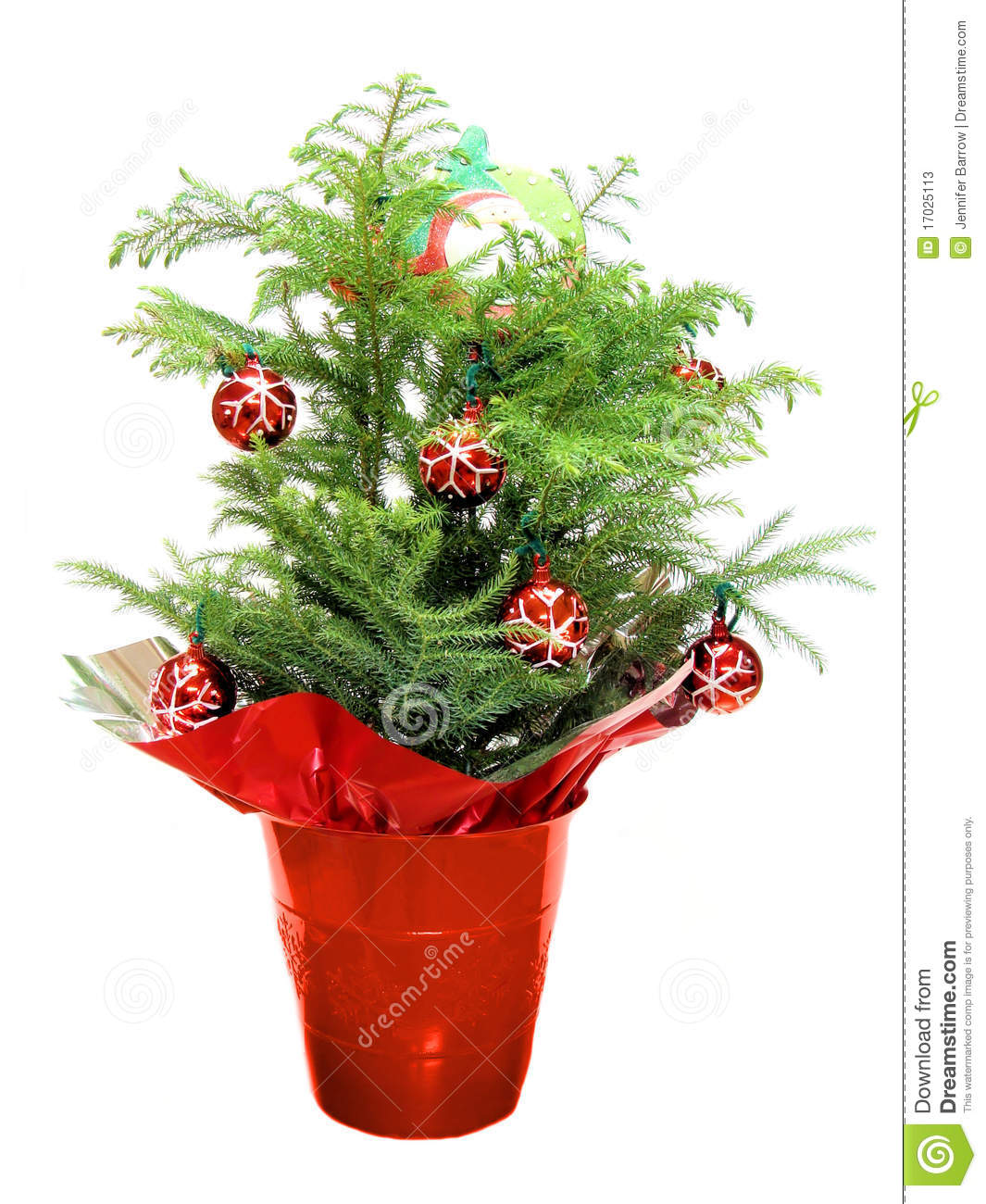 Norfolk pine christmas tree clipart.