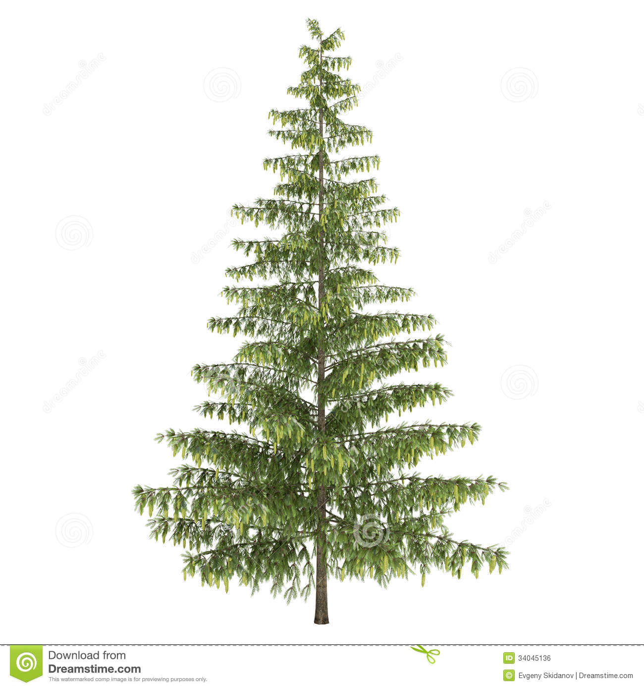 Tall pine tree clipart.