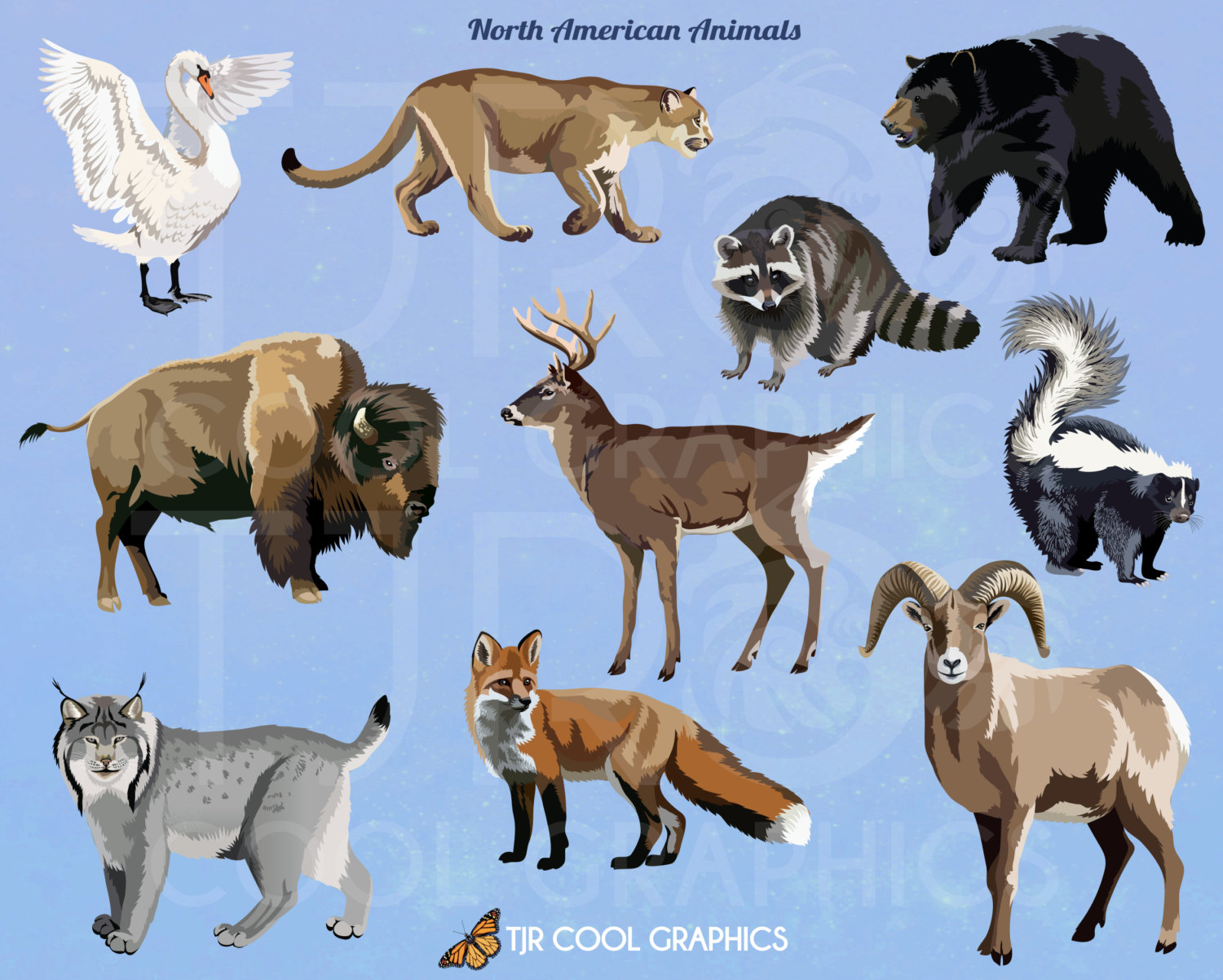 North American Animals Digital Realistic Clip Art PNG.