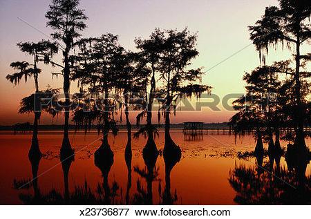 Picture of Lake Waccamaw, North Carolina x23736877.