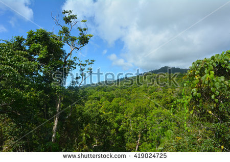 Landscape Wild Stream Daintree National Park Stock Photo 420906754.