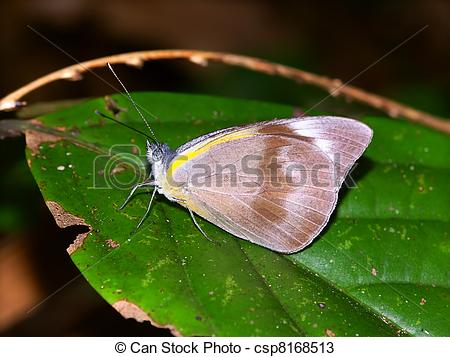 Stock Photos of Tropical Rainforest Butterfly.