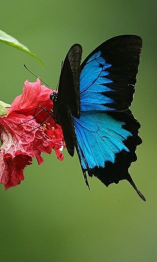 1000+ images about Butterflies and Moths on Pinterest.