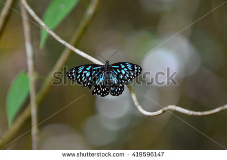 """""""butterfly_in_rainforest"""" Stock Photos, Royalty."""