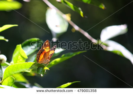 Butterfly Sitting On The Leaf Stock Photos, Royalty.